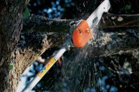 Tree Care & Maintenance